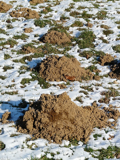 Molehill, Mole, Earth, Erdhaufen, Dig, Scoop, Hill