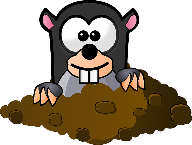 Animal, Mole, Underground, Furry, Looking, Curious