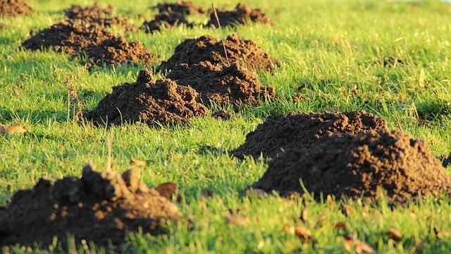 Molehill, Mole, Earth, Meadow, Rush, Lawn Mower