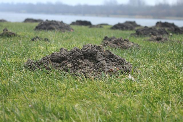 Molehill, Molehills, Scherhaufa, Earth Excavation