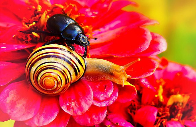 Forest Beetle, The Beetle, Wstężyk Huntsman, Molluscs