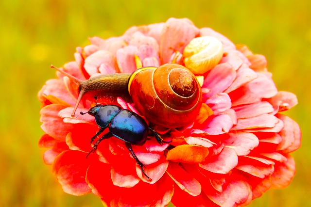 Forest Beetle, Insect, The Beetles, Molluscs, Snail