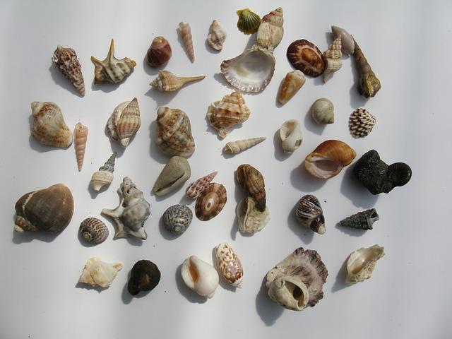 Mussels, Marine Gastropods, Water Snail, Molluscs