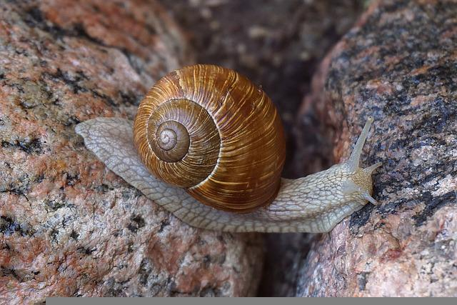 Snail, Winniczek, Cover, The Creation Of, Molluscum