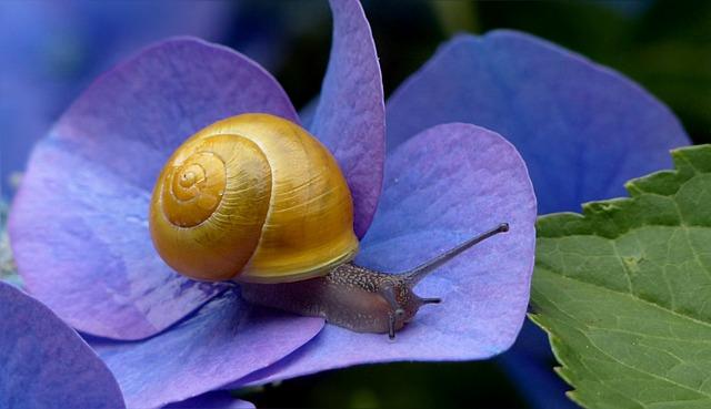 Animal, Mollusk, Reptile, Snail, Yellow, Housing