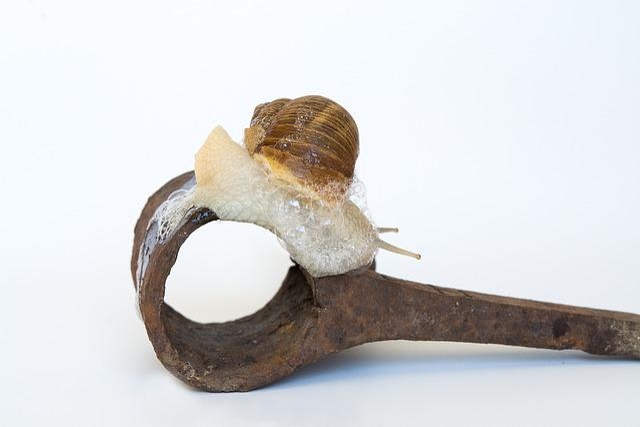 Snail, Shell, Iron, Rusty, Animal, Mollusk, Crawl