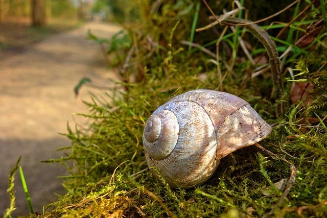 Snail-shell, Snail, Shell, Mollusk, Gastropod, Animal