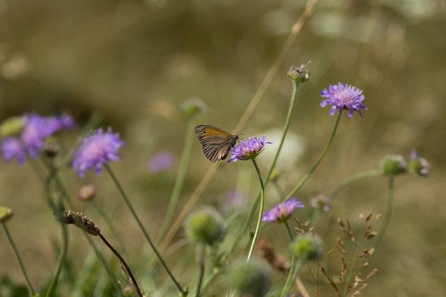 Natural, Grass-heath, Mols Bjerge