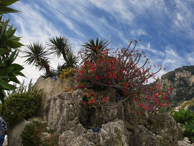 Kakdeen, Mountain, Monaco, Bot, Garden, Blossom, Bloom