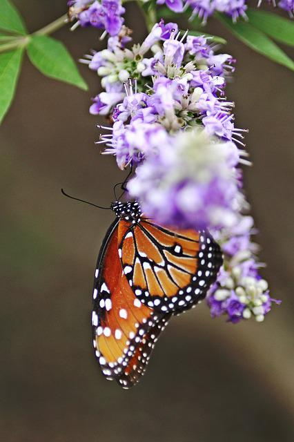 Monarch Butterfly, Flower With Butterfly, Natural