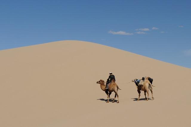 Mongolia, Desert, Gobi, Sand Dune, Camel