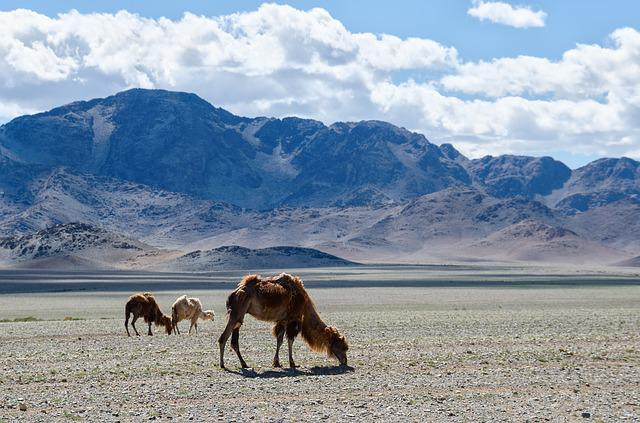 Mongolia, Nature, Camel, Steppe, Mountains