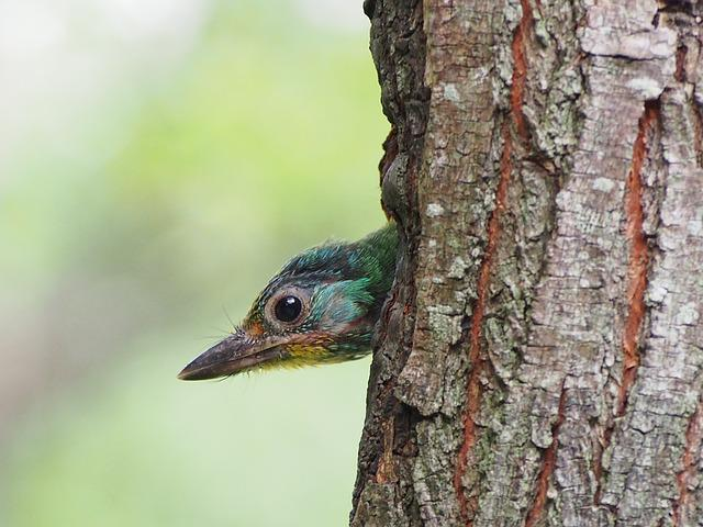 Colored Birds, Nestling, Monk, Quasi Woodpecker