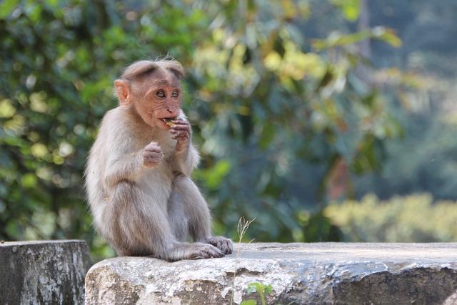 Monkey, Makake, Africa, Kenya