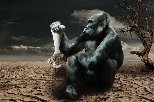 Gorilla, Hunger, Environmental Awareness, Monkey