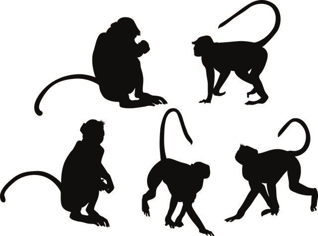Animal Silhouettes, Monkey, Silhouette, Jungle, Animal