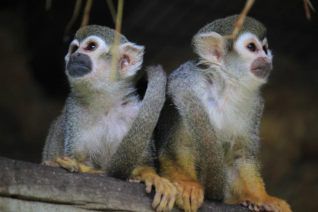 Mono, Monkey, Animal, Mammal, Nature, Fur, Look, Fauna