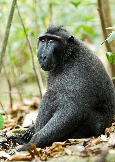 Monkey, Primate, Ape, Wildlife, Mammal, Animal