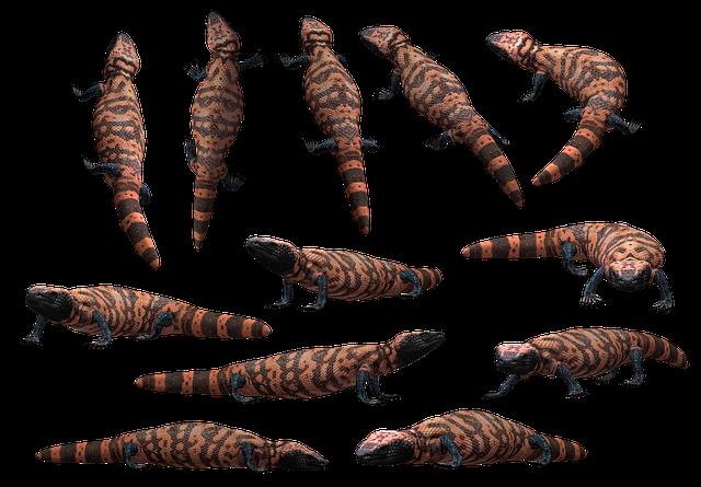 Lizard, Reptile, Gila, Beaded, Monster, Venom, Venomous