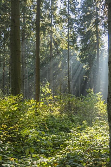 Back Light, Ore Mountains, Autumn Mood, Mood, Sun