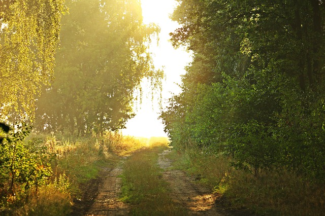Light, Sun, Fog, Lane, Mood, Landscape, Forest, Nature