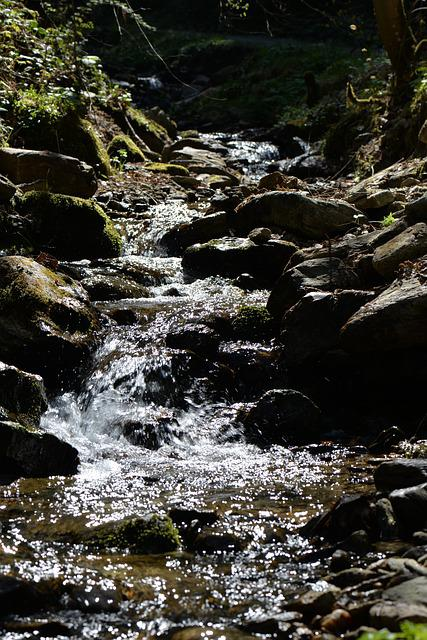 Forest Brook, Waters, Idyll, Mood, Bach, Nature