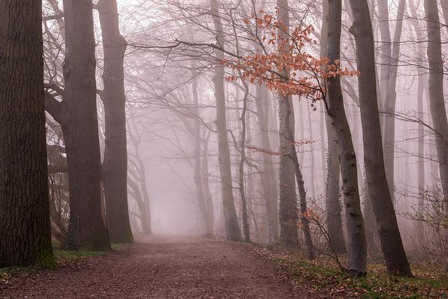 Fog, Forest, Trees, Nature, Autumn, Mood, Rising Fog