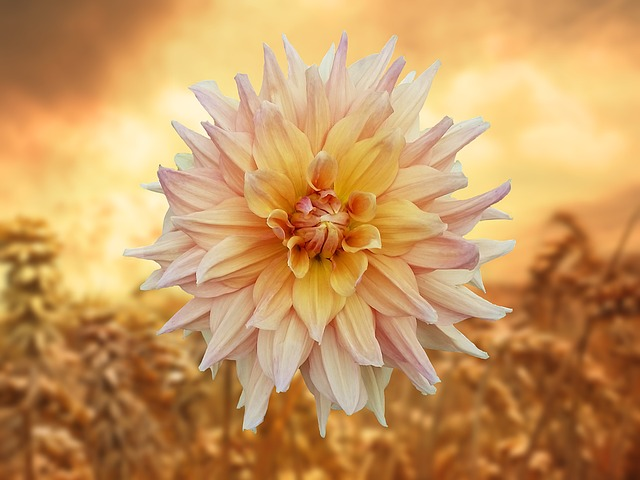 Flower, Orange, Summer, Nature, Golden, Warm, Mood