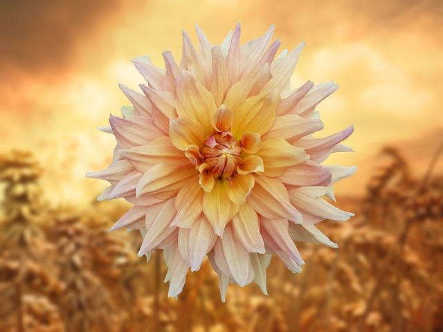 Flower, Orange, Summer, Nature, Golden, Warm, Mood