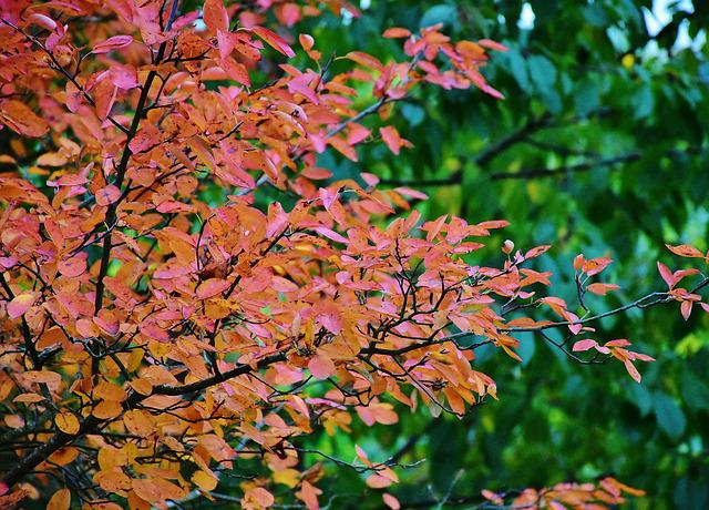 Nature, Autumn, Tree, Leaves, Yellow, Red, Mood