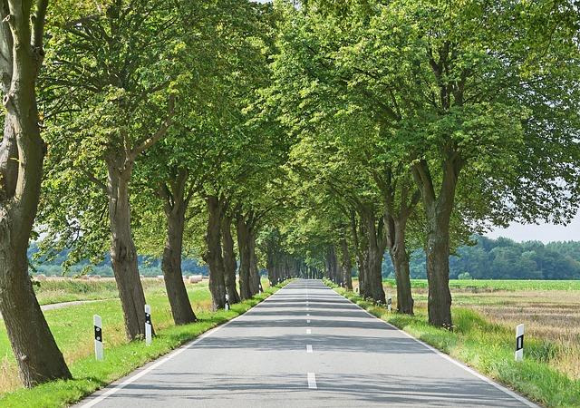 Avenue, Road, Leaf Roof, Landscape, Mood, Shadow, Light