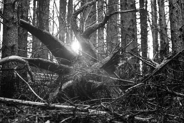 Forest, Root, Light, Sonner, Mood, Black White