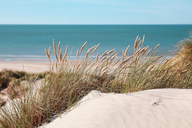 Water, Dunes, Summer Feeling, Dune Grass, Mood