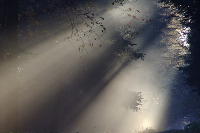 Sunbeam, Fog, Autumn, Nature, Sunlight, Mood