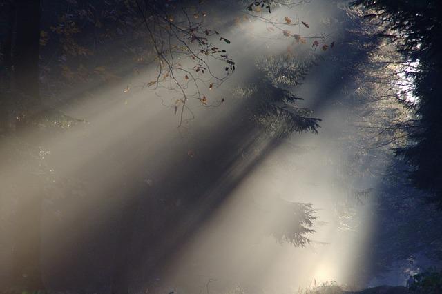 Sunbeam, Fog, Autumn, Nature, Sunlight, Mood