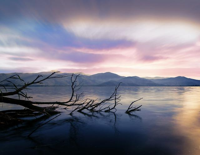 Tree, Lonely, Long Exposure, Water, Landscape, Mood