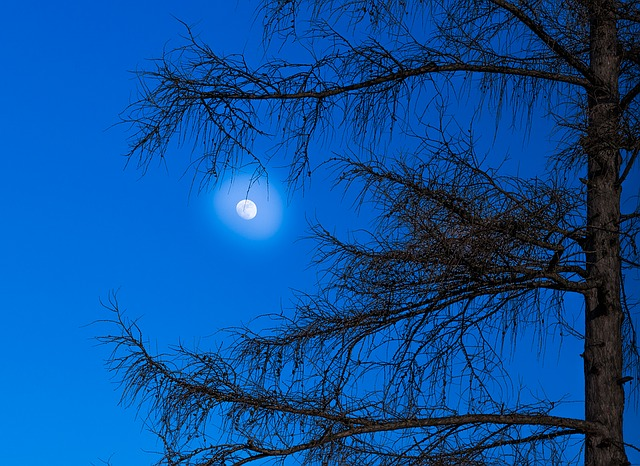 Moon, Larch, Tree, Mood, Mystical, Hof, Light, Blue