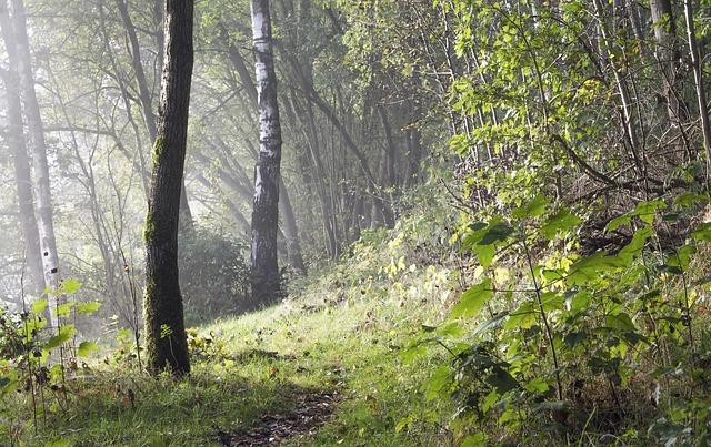 Fog, Landscape, Mood, Nature, Tree, Ticino, Mountains