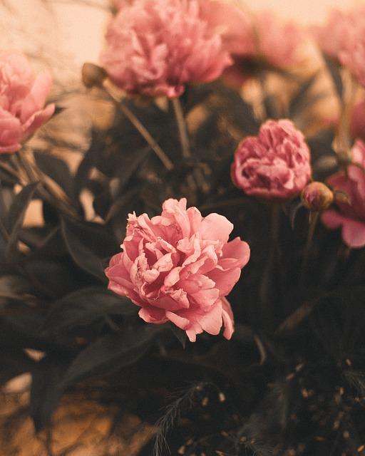 Moody, Flowers, Interior