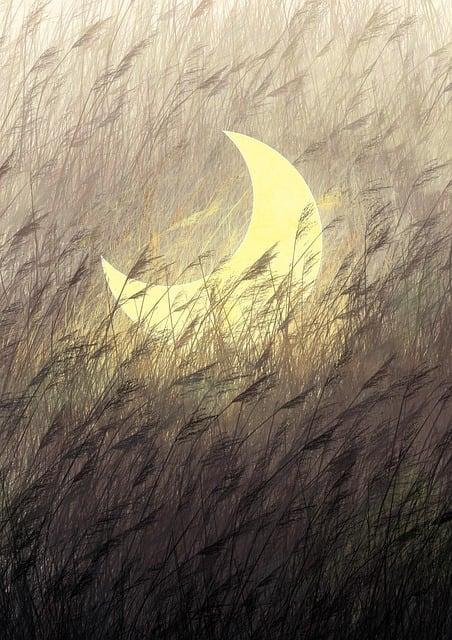 Moon, Grass, Reed, Evening, Fairytale, Imagination
