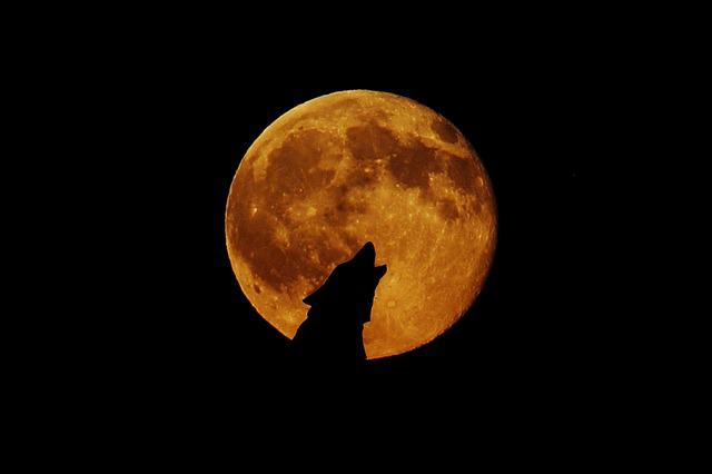 Full Moon, Moon, Wolf, Howl, Photo Montage, Atmosphere