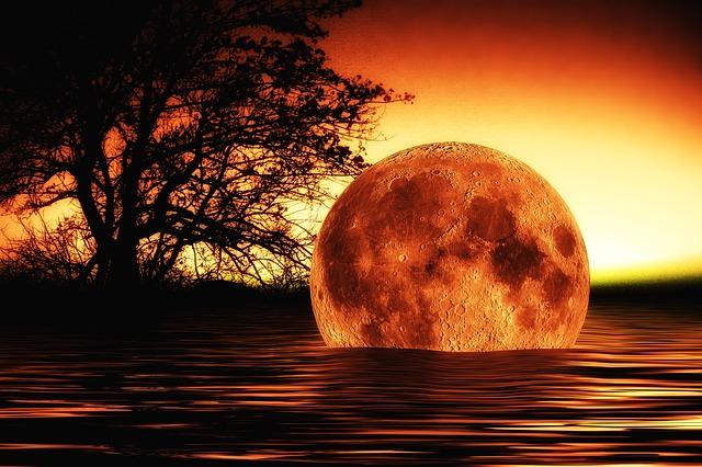 Water, Wave, Moon, Tree, Mirroring, Apocalypse