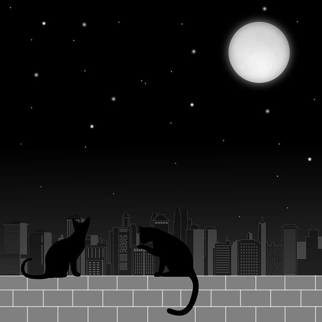Moon, Cats, Night