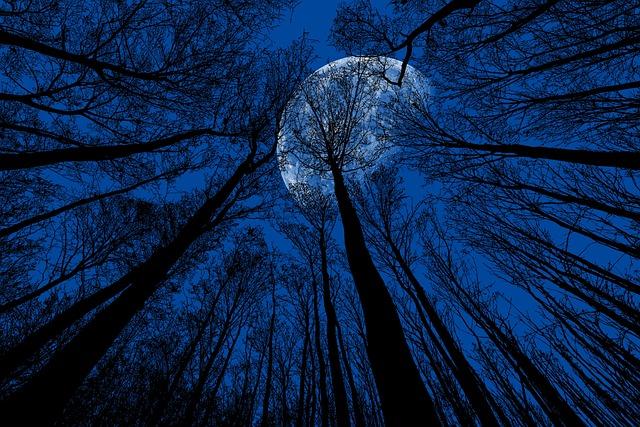 Night, Moon, Night Sky, Moonlight, Blue, Trees, Dusk