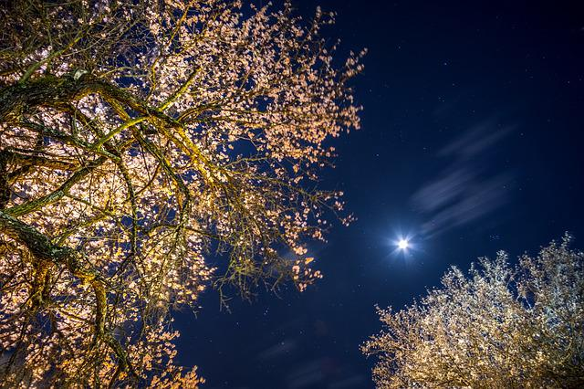 Sky, Moon, Night, Trees, Darkness, Blue, Clouds