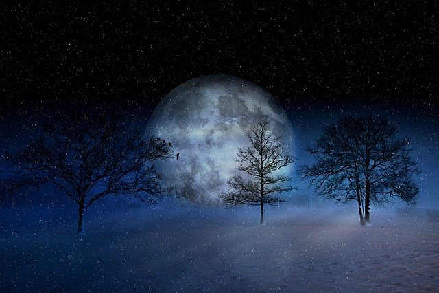 Winter, Wintry, Moon, Christmas, Snow, Snowy, Trees