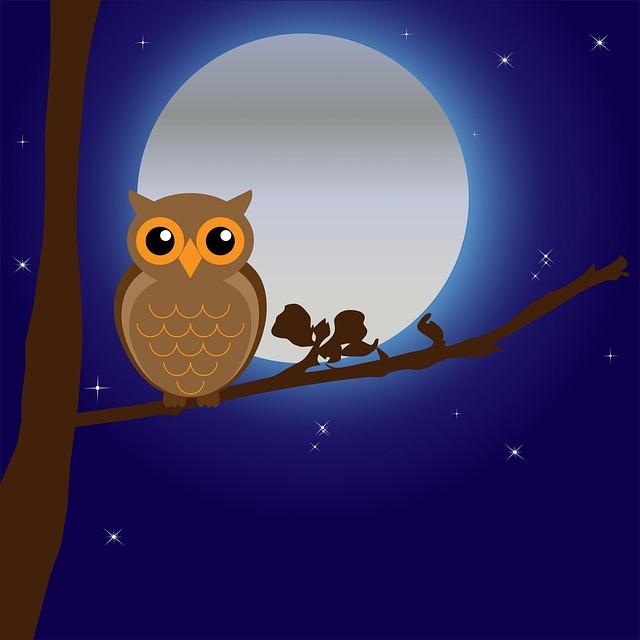Owl, Bird, Animal, Tree, Branch, Night, Moon, Moonlight