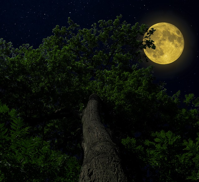 Nature, Forest, Tree Moon, Sky, Light, Night, Moonlight