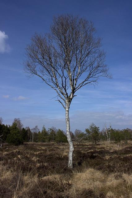 Moorland, Moor, Nature, Nature Reserve, Wetland, Birch