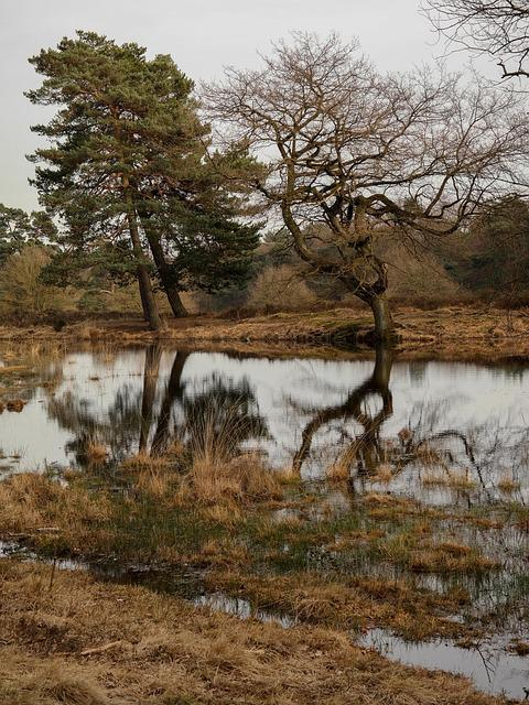 Trees, Mirroring, Lake, Pond, Moor, Water, Wahner Pagan
